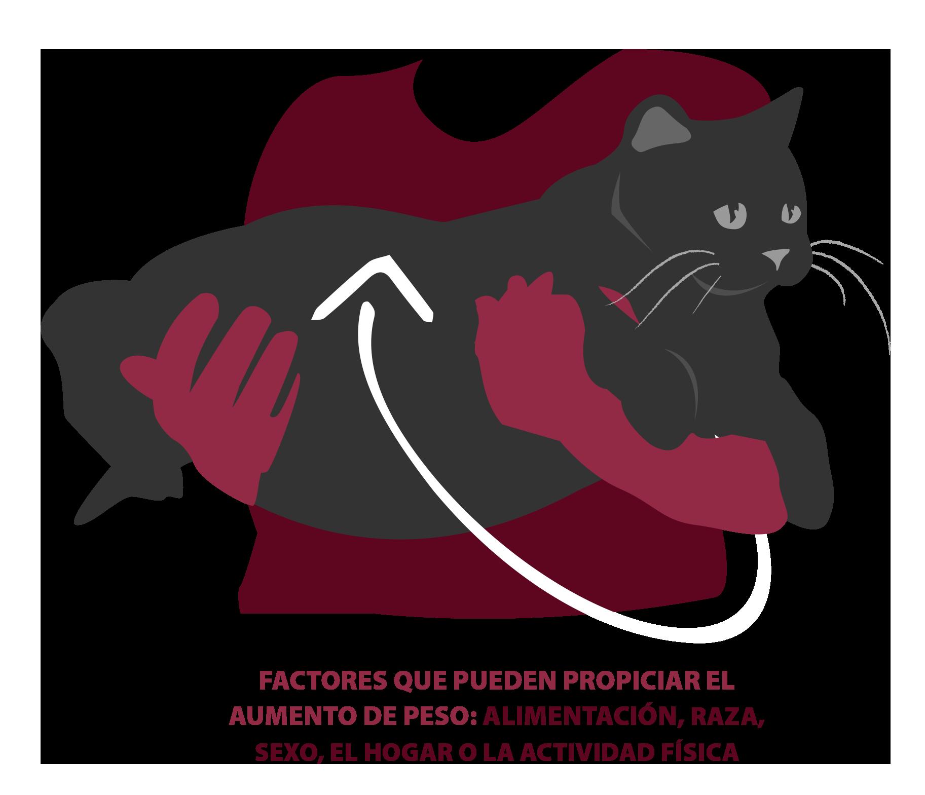 NaturalGreatness_El sobrepeso en gatos_02