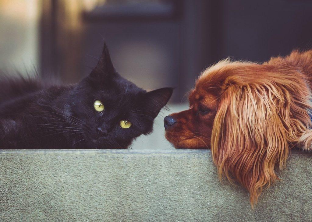 Tips para mejorar la convivencia de perros y gatos