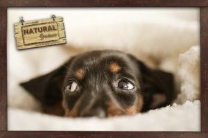 Consejos para relajar a tu mascota ante ruidos fuertes