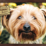 Precauciones a tener en cuenta con los perros en la primavera