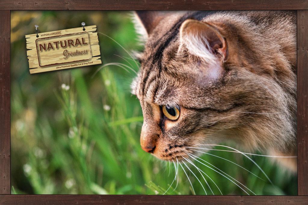 Cuidados específicos para el gato en primavera