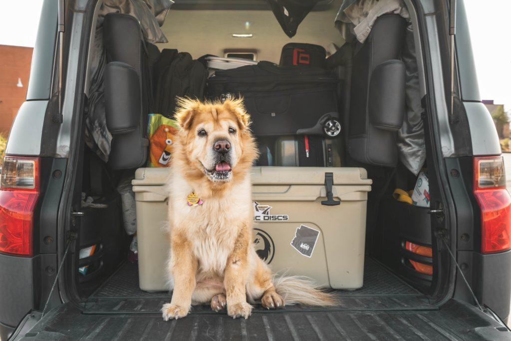 Planes para este verano con tu mascota_imagen