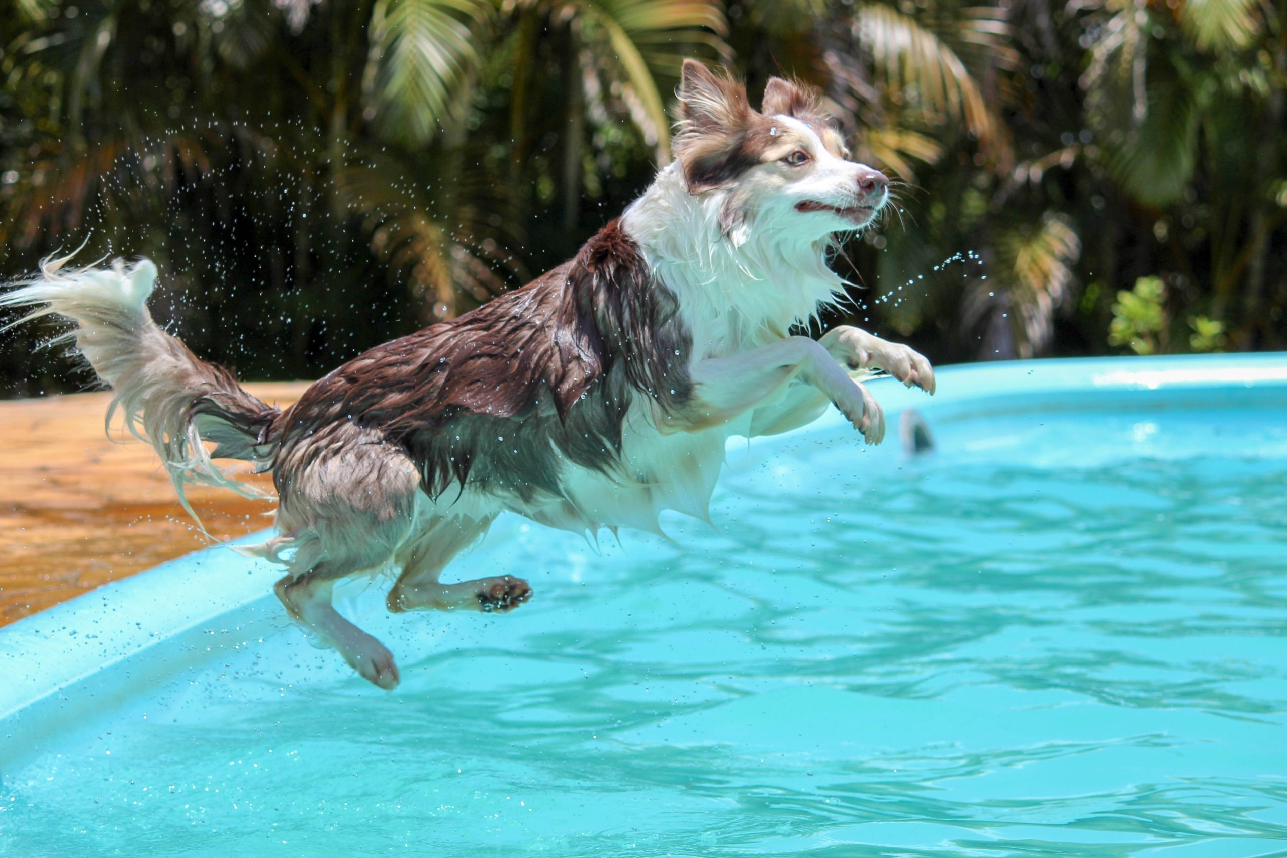 Planes para este verano con tu mascota_imagen01